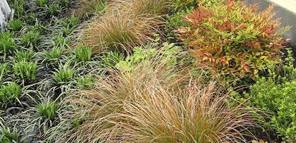 Plants and foliage.
