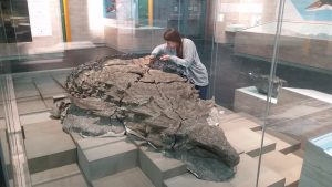 A woman looks closely at a fossilized dinosaur inside a glass case in a museum.