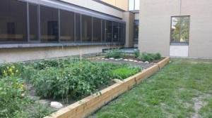 Brandon University Healthy Campus Community Garden, 2014 (web)