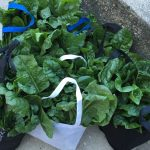 Bags of leafy greens