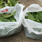 Bags of harvested spinach