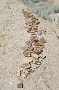 A long, narrow trail of rocks containing fossils is seen lying on the ground.