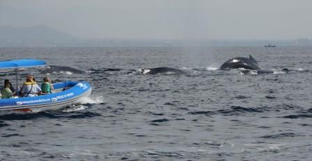 Whale-watching off Puerto Vallarta (photo credit Dr. Chris Malcolm) (web)