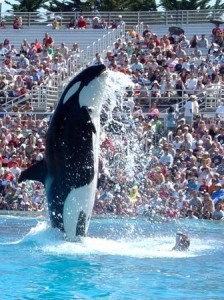 killer whale and crowd (web)