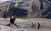Can ancient Arctic swamp forests help us predict the effects of climate change?